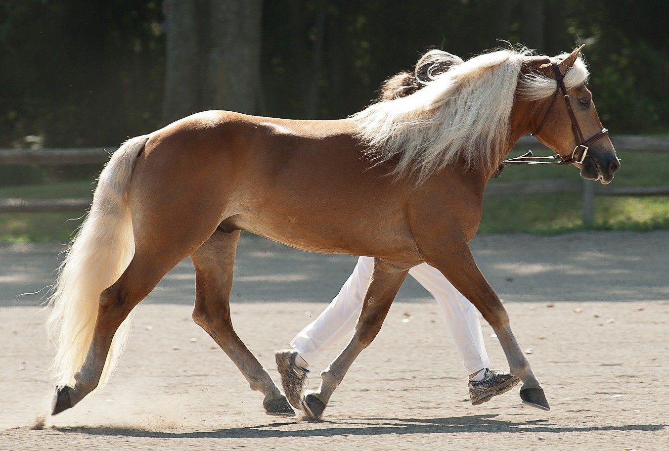 Página dedicada a los caballos . Fichas informativas sobre razas de ...
